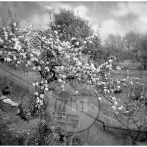 Lampič privat_017: Pod cvetočo jablano, steklena plošča 12x16 cm, družinski arhiv.