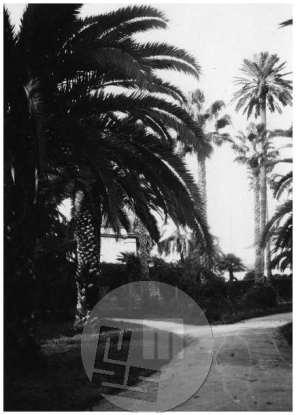 SL5276: Sevilla; mestni park, pogled na visoke palme.
