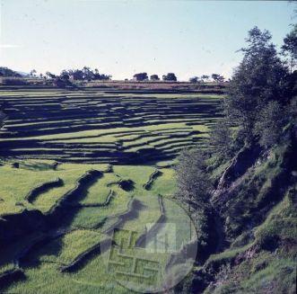Nepal je gorata pokrajina, zato domačini delajo terase in tako pridobijo zemljo za pridelavo hrane, npr. riža, ajde, ječmena, prosa, repe ali krompirja. Foto: Aleš Kunaver.