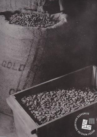 Uvožena zrna kakavovca, ki so osnovna surovina za proizvodnjo čokolade. Foto: Ivan Krahulec, hrani MNZS.