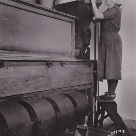 Zrna so dali v poseben stroj, kjer so se luščila. Foto: Ivan Krahulec, hrani MNZS.