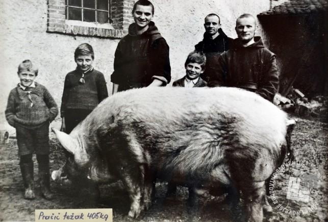 Poleg menihov, b. Stanislav Vatovec, p. Pij Novak in b. Izidor Kovačič, so ob prašiču tudi okoliški otroci. Foto: neznan, hrani: MNZS.