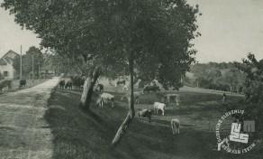 Samostanska živina na paši pred pristavo. Foto: neznan, hrani: MNZS.