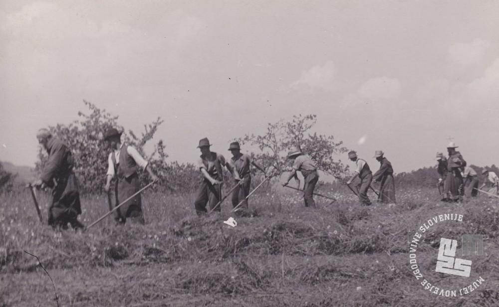 Trapisti in najeti delavci pri košnji trave. Foto: neznan, hrani: MNZS.