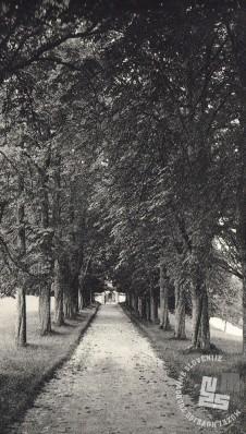 Do pokopališča je vodila cesta in tudi drevored, ki je bil obenem sprehajalna pot menihov. Foto: neznan, hrani: MNZS.