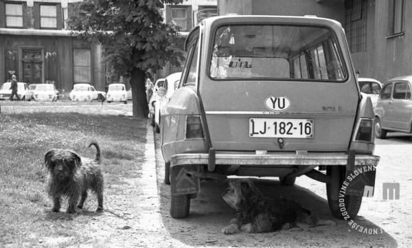 DE7613_457: Foto: Miško Kranjec, hrani: MNZS.