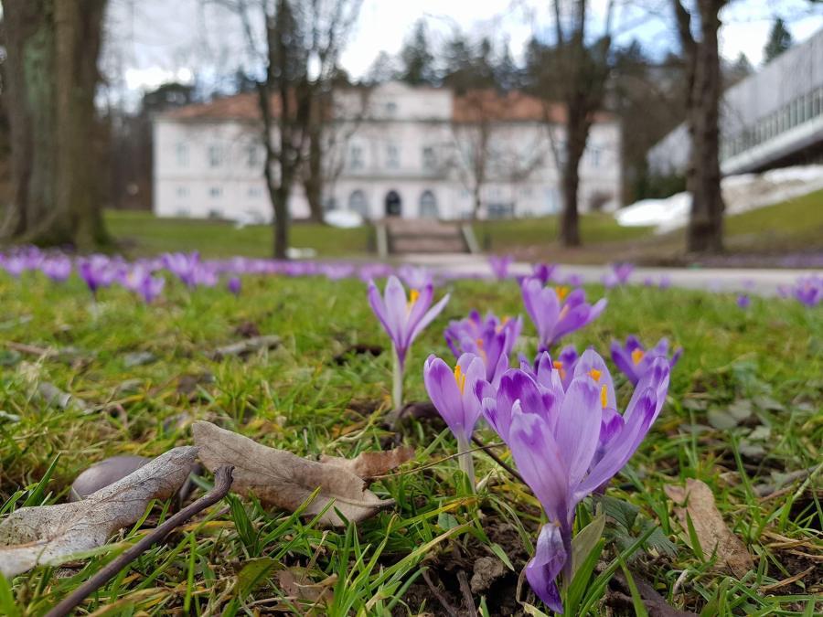pomlad v muzeju